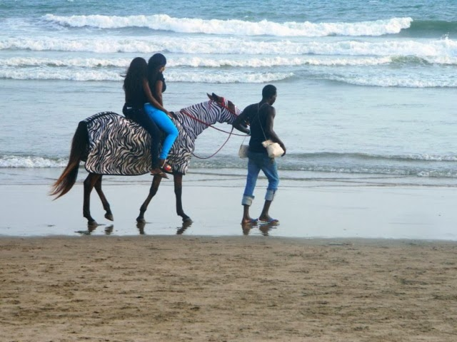 Two beauties, a gent, a horse and the beach